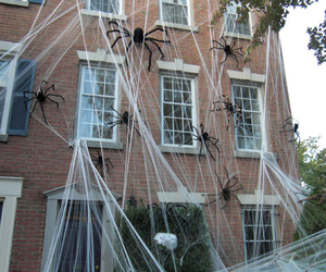 spider, Halloween, and house image