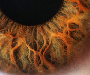 eye, eyes, and iris image