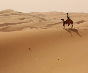 arabian, street, and camels image