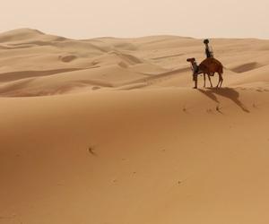 arabian, camels, and desert image