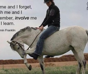 horse, learn, and quotes image