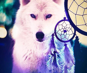 wolf and Dream image