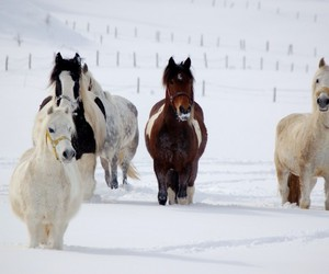 horses, OMG, and snow image