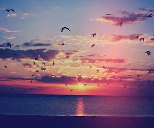 bird, sunset, and sea image