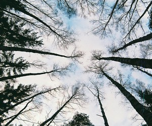 tree, sky, and forest image