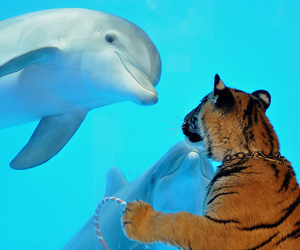 dolphin, tiger, and animal image