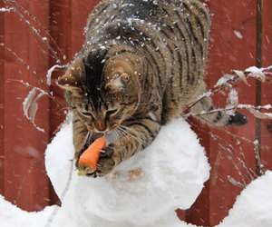 cat and snowman image