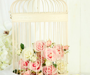 cage, rose, and beautiful image