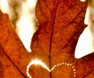 heart, love, and autumn image