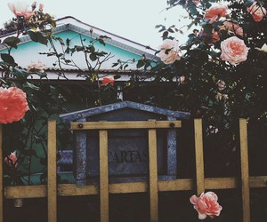 flowers, amazing, and beautiful image