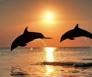 beautiful, sun, and dolphins image