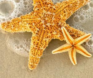 starfish, beach, and sea image