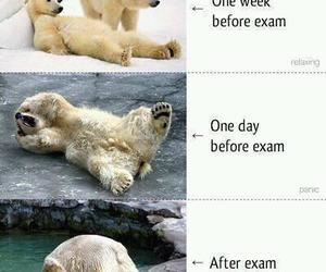 exam, funny, and bear image