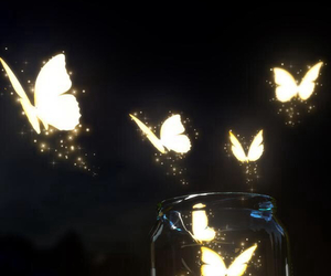 butterfly, light, and mariposas image