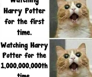 harry potter, cat, and funny image