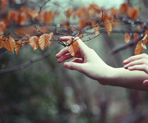 leaves, autumn, and hands image