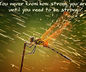 dragonfly, strength, and strong image