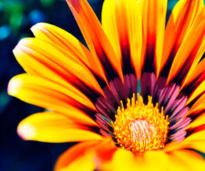 flowers, lighting, and texture image