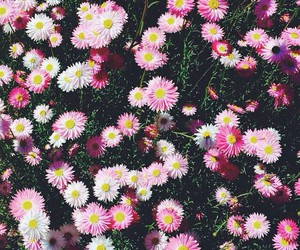 flowers, echinacea, and цветы image