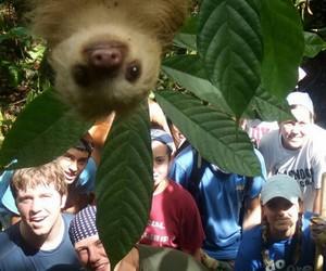 sloth, animal, and funny image