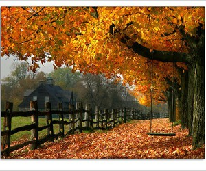 autumn, nature, and swing image