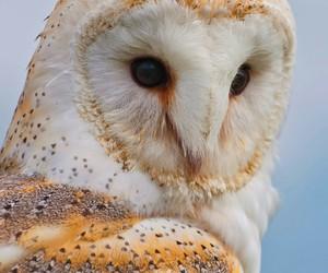 barn owl, google, and birds gallery image