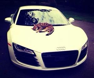 audi, cat, and car image