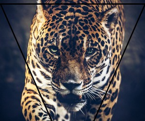 animal, dope, and leopard image