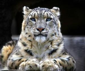 animal, beautiful, and gorgeous image