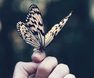 butterfly, nature, and hand image