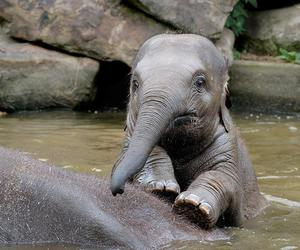 baby, elephant, and love image