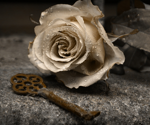 rose, key, and flowers image