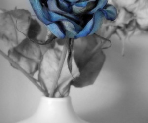 blue, flower, and blanc and white image
