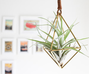 air plant, green, and cactus image