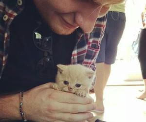 ed sheeran, cute, and cat image