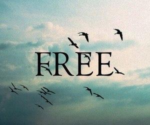 free, bird, and sky image