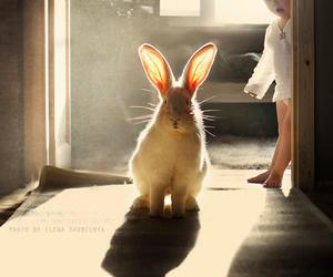 rabbit, baby, and bunny image