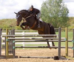 horse, horse tack, and training image