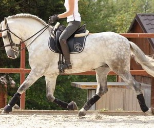 dressage, horse, and pre image