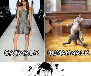 funny, catwalk, and lol image