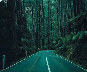road, green, and nature image