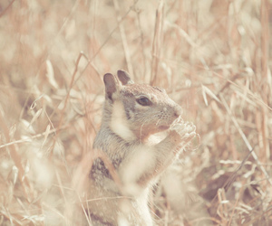animal, nature, and squirrel image