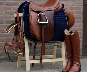 horse, equestrian, and saddle image