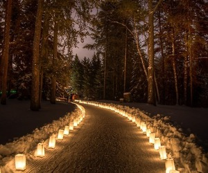 light, night, and forest image