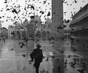 black and white, bird, and photography image