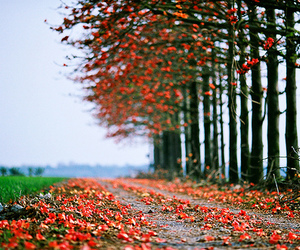 tree, nature, and autumn image