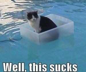 cat, HAHAHA, and sarcastic image