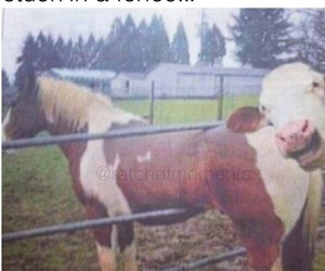 animals, cow, and funny image