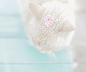 cat, pastel, and flowers image