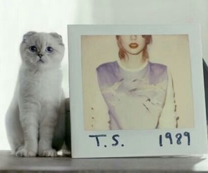 1989, cat, and Taylor Swift image